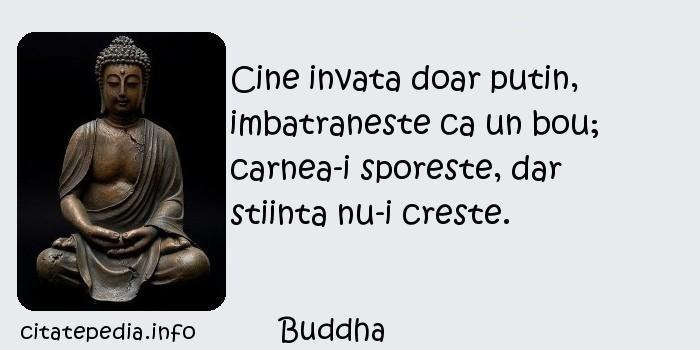 Buddha - Cine invata doar putin, imbatraneste ca un bou; carnea-i sporeste, dar stiinta nu-i creste.